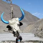 Horse Riding to The Forbidden Kingdom Upper Mustang, Lodge Trek 17 Days