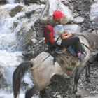 Horse Riding Trek with children, Langtang Heritage, 10 Days