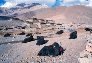 Inner Dolpo Trek, 26 Days