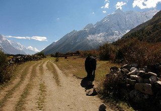 TSUM VALLEY Lodge and Basic Homestay TREK, 20 DAYS FIXED DEPARTURE