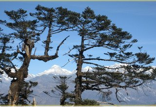 Alpine Way: Section 2: From Tumlingtar to Lukla via Sherpani Col 6100m, Camping Trek 30 Days