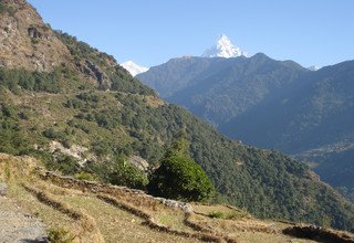 Horse-Riding in Ghandruk Circuit Family Lodge Trek, 9 Days 27 Oct to 04 Nov 2012