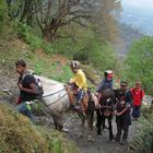 ABC Challenging Family Lodge Trek 11 Days, 02 April to 11 April 2012
