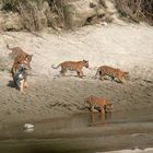 Bardia National Park Tour, 3 Nights 4 Days
