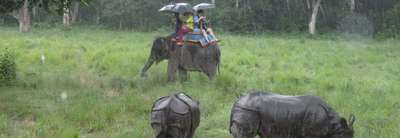 Book this Trip Chitwan National Park Tour Package, 3 Nights 4 Days