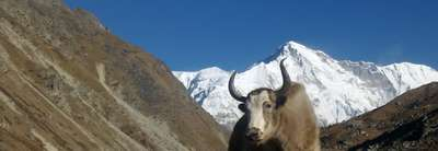 Annapurna Conservation Area Project (ACAP)
