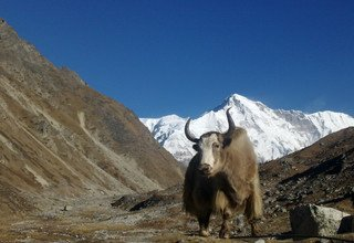 Everest & dur cuire. Via Renjo Pass, faire du camping, 22 jours
