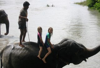 Chitwan Tour 1 Night 2 Days Package