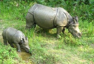 Chitwan Tour 3 Nights 4 Days Package