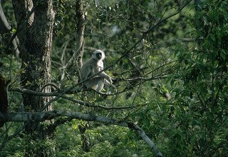 Bardia National Park Tour Packages, 3 Nights 4 Days