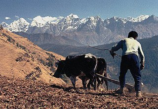 Lower Solukhumbu Cultural Trail Trek (Sherpaland) for families, 9 Days